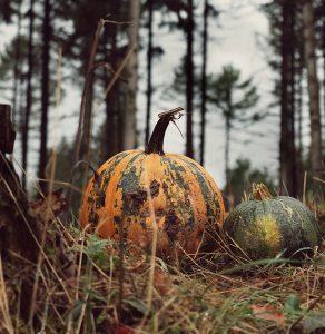 pumpkin, vegetables, harvest